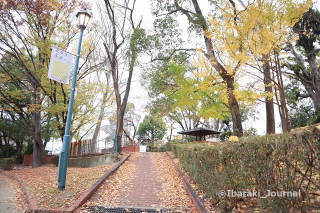 1127川端通りの公園坂道下からIMG_7088