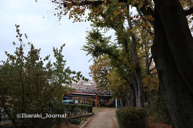 1127川端通り沿い元茨木川緑地でIMG_7080