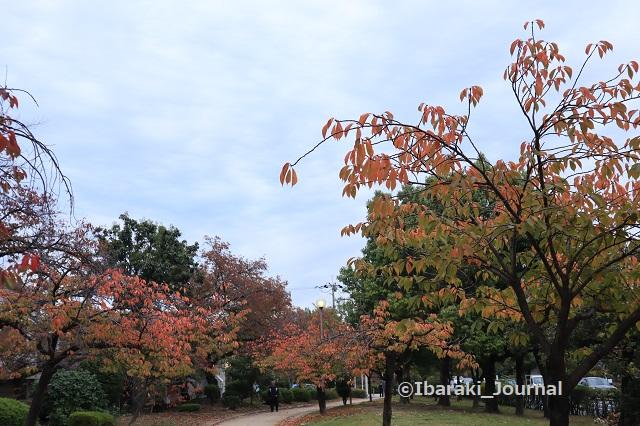 1106元茨木川緑地風景IMG_6416