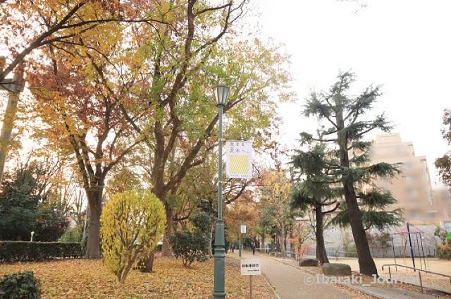 11-1208元茨木川緑地風景3IMG_7599
