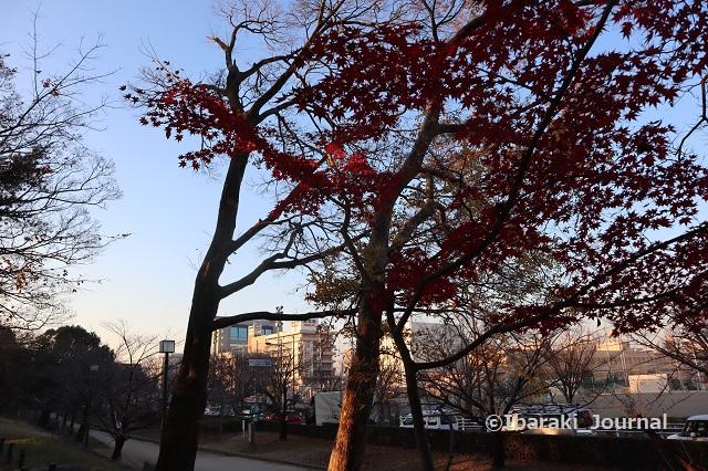 1222-4元茨木川緑地のもみじIMG_7929