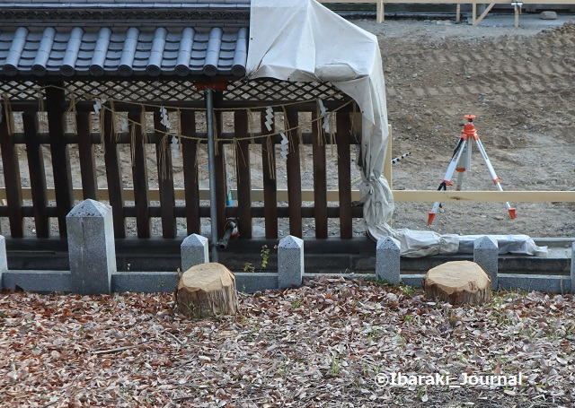 1222-6茨木神社そばの切り株IMG_7931