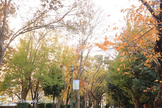 7-1208元茨木川緑地の風景2IMG_7576