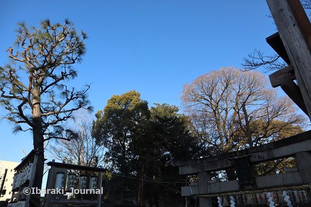 2021茨木神社大鳥居のところIMG_8280
