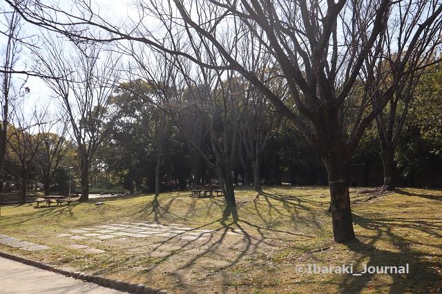 7-20210216元茨木川緑地梅林のベンチIMG_9233
