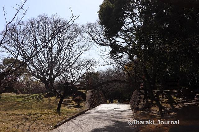 2-20210216元茨木川緑地梅林の太鼓橋IMG_9218