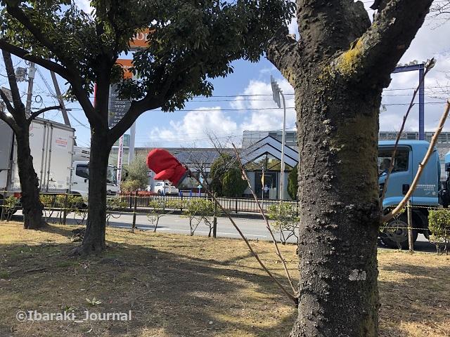 落とし物20210216横江信号そばIMG_0050