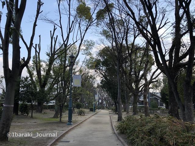 0223元茨木川緑地川端通り沿いIMG_0266