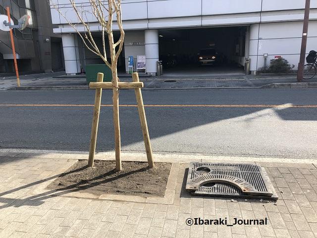 0310中央通りで木の植え替え4IMG_0606