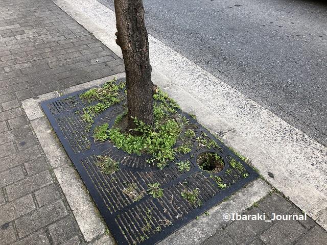 0310中央通りの植木のところIMG_0610