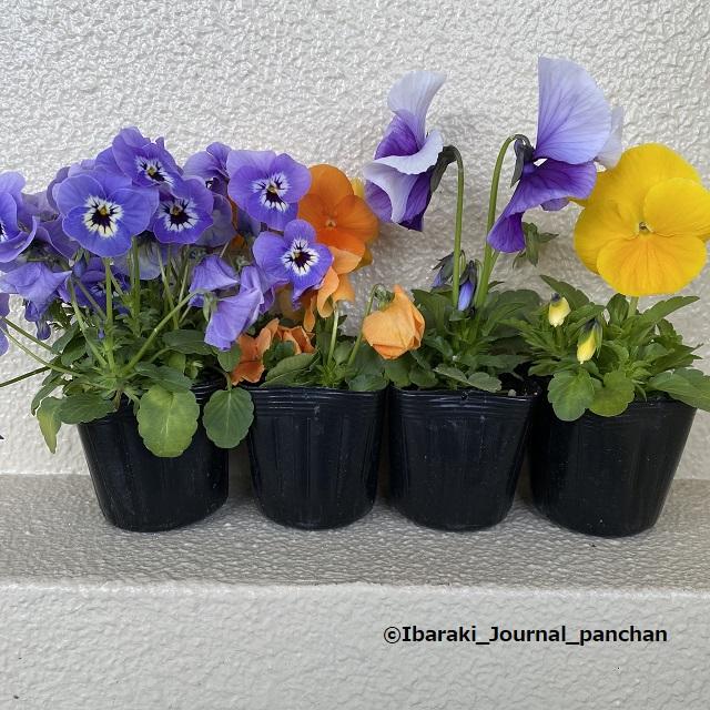 みしま館のお花20210322写真動画 2718