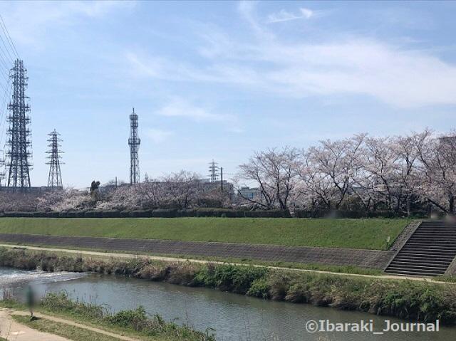 安威川太田のところで桜IMG_1004