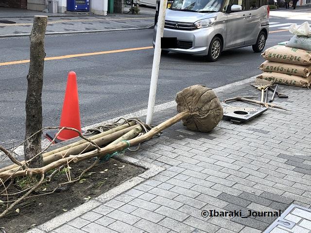 0310中央通りで木の植え替え2IMG_0604