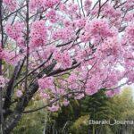 0323桃の花IMG_2224 (2)