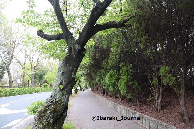 0412-12川端通り聖火リレーコースIMG_0140 (2)