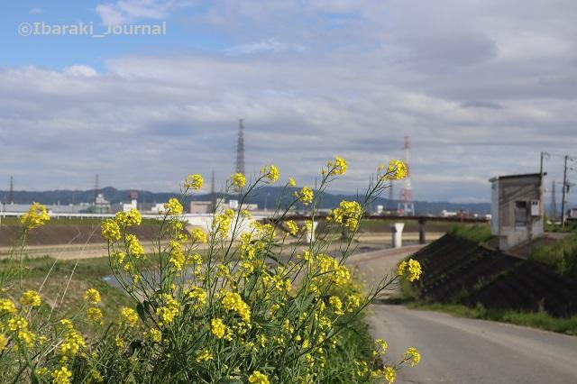 0416あけぼの橋のほうIMG_0180