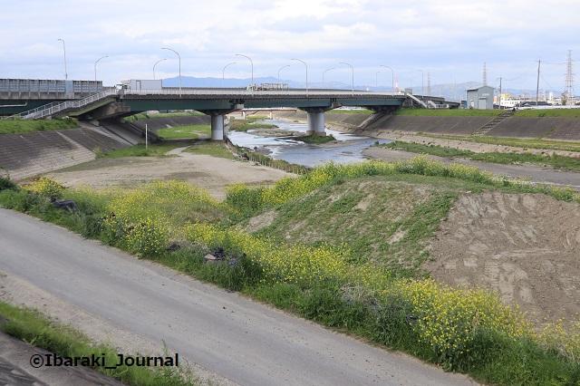 0416あけぼの橋の北の土手2IMG_0191