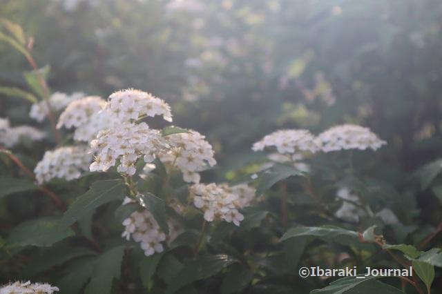 5元茨木川緑地の花IMG_0304