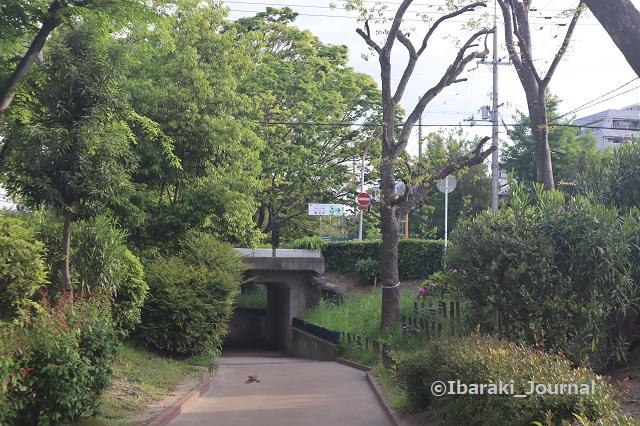 6-0425元茨木川緑地の丹波橋IMG_0305