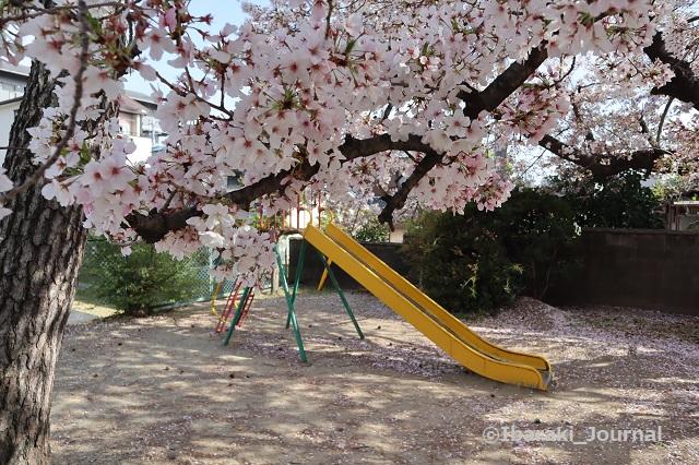 20210401南茨木天王社公園IMG_9918