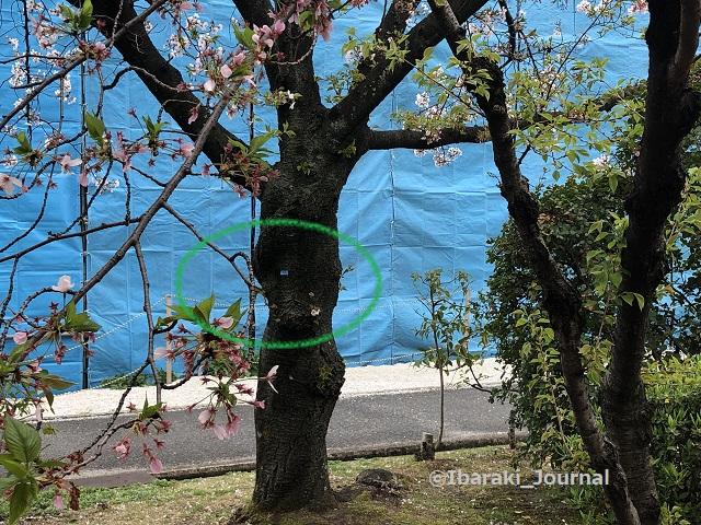 IMG_1165佐和良義神社信号そばkk