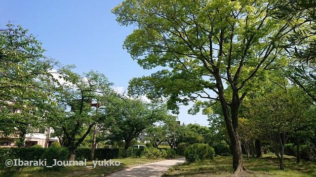 元茨木川緑地の風景2021年5月DSC_1430