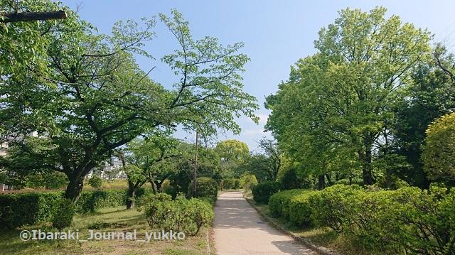 元茨木川緑地2021年5月風景DSC_1431
