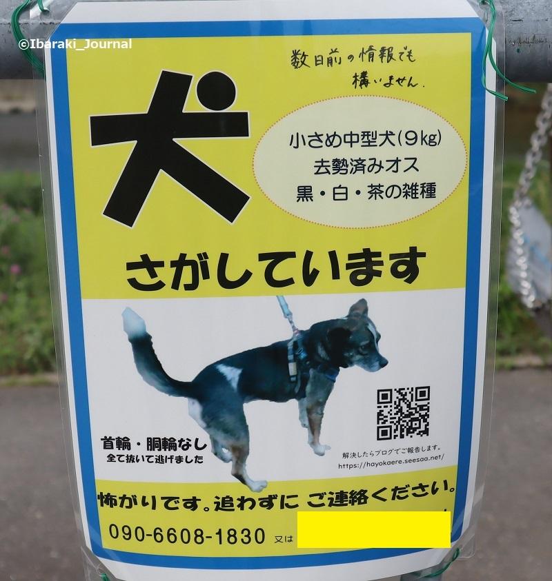 犬を探していますのチラシIMG_1607