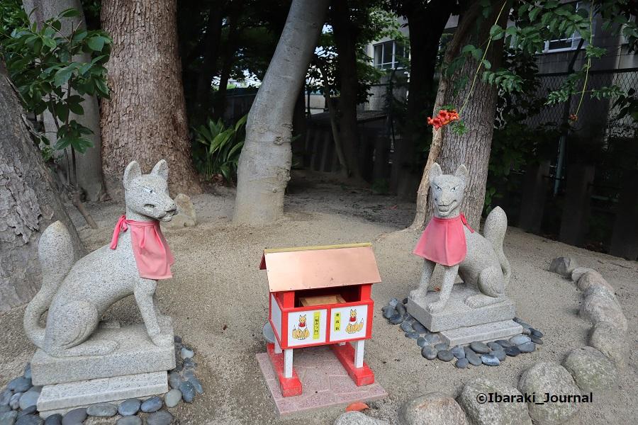 0629井於神社のおきつねさんIMG_1820