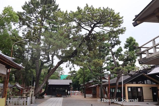 0606茨木神社境内IMG_1040