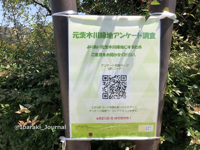 0601元茨木川緑地のアンケート2IMG_2706