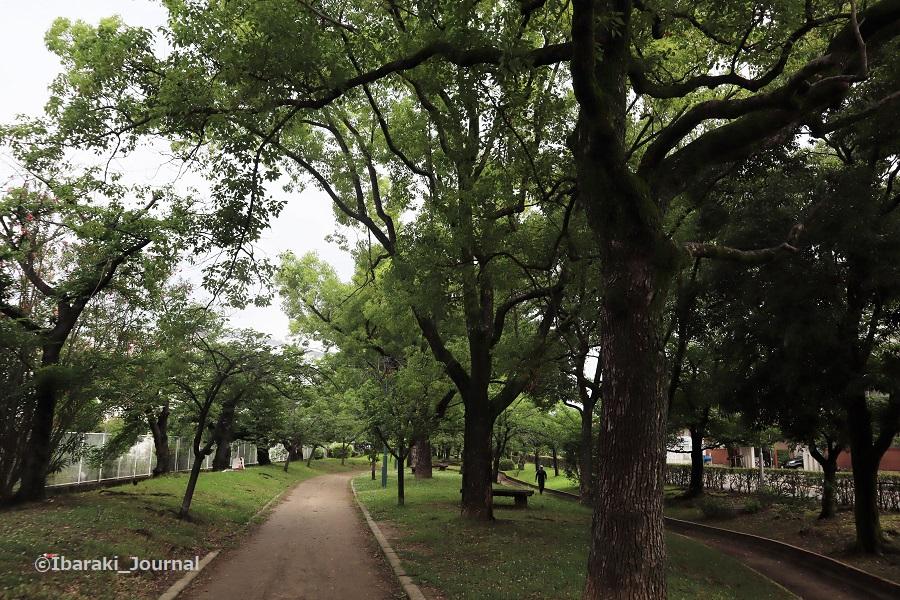 0620元茨木川緑地の風景IMG_1536 (2)