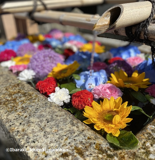 茨木神社4花手水4