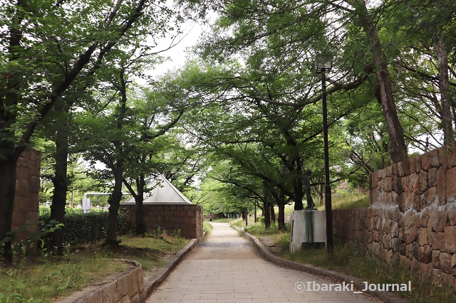 0612元茨木川緑地でIMG_1345 (2)