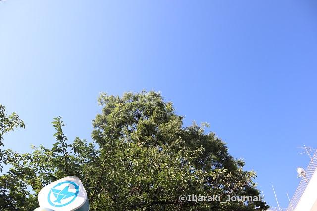 0614いばらき消防横元茨木川緑地でIMG_1434