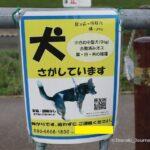 0620-kkさがし犬IMG_1607