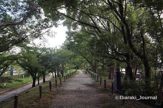 0718元茨木川緑地沿いの道IMG_2377