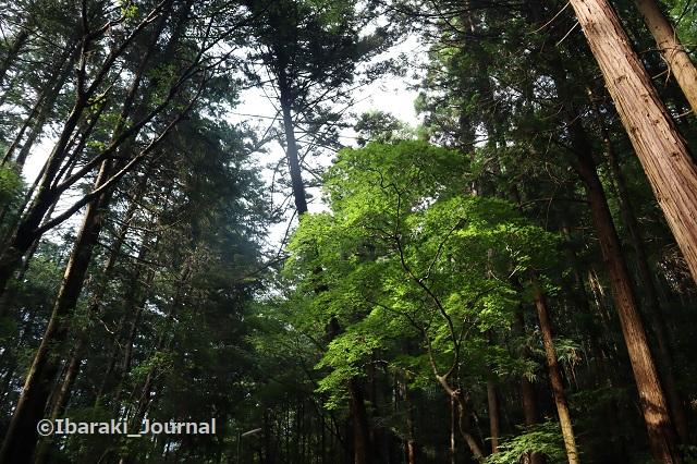 0711春日神社境内の木々IMG_2207