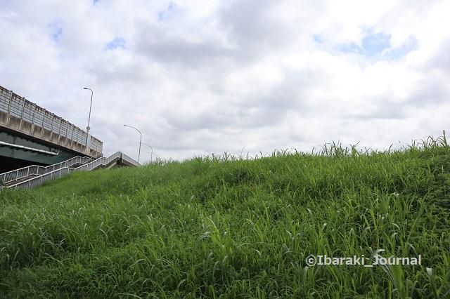 10822安威川あけぼの橋の堤防IMG_3171