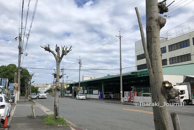 0921宮島furahaカフェ前の道20210921040710