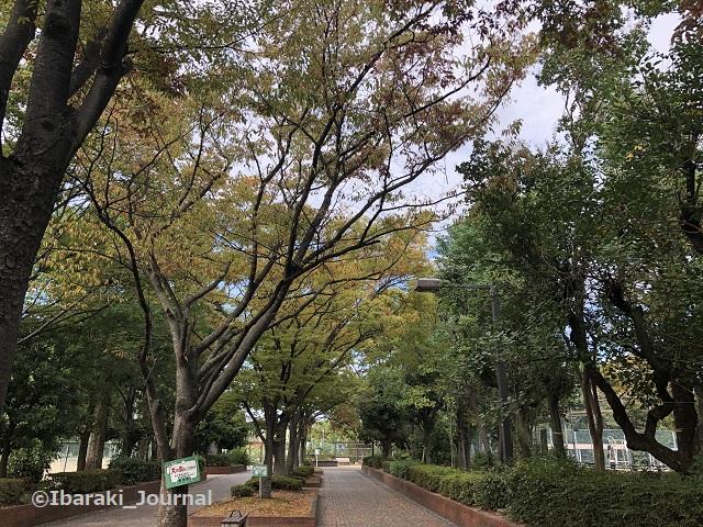 1012バラ園への道20211012021844